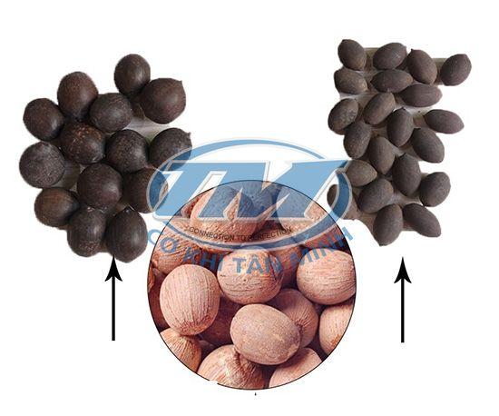 Máy bóc vỏ hạt sen khô